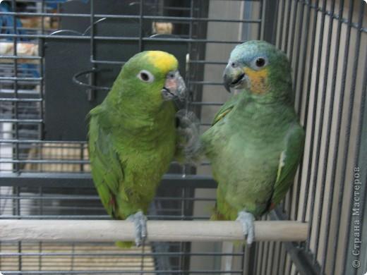 Сегодня мы приглашаем всех посетить выставку попугаев и экзотических птиц. Думаю, что писать здесь что-то об этих замечательных созданиях нет смысла. Просто смотрите и любуйтесь их окраской) фото 3