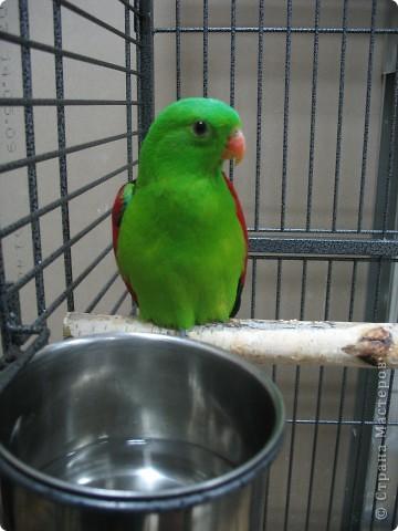 Сегодня мы приглашаем всех посетить выставку попугаев и экзотических птиц. Думаю, что писать здесь что-то об этих замечательных созданиях нет смысла. Просто смотрите и любуйтесь их окраской) фото 4
