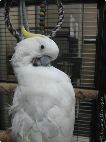 Сегодня мы приглашаем всех посетить выставку попугаев и экзотических птиц. Думаю, что писать здесь что-то об этих замечательных созданиях нет смысла. Просто смотрите и любуйтесь их окраской) фото 1