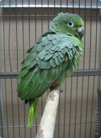 Сегодня мы приглашаем всех посетить выставку попугаев и экзотических птиц. Думаю, что писать здесь что-то об этих замечательных созданиях нет смысла. Просто смотрите и любуйтесь их окраской) фото 5