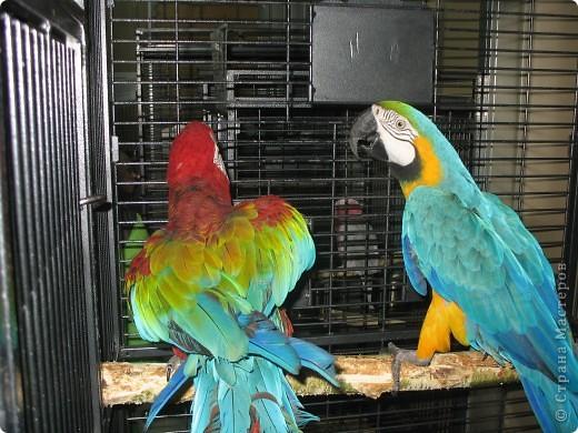 Сегодня мы приглашаем всех посетить выставку попугаев и экзотических птиц. Думаю, что писать здесь что-то об этих замечательных созданиях нет смысла. Просто смотрите и любуйтесь их окраской) фото 6