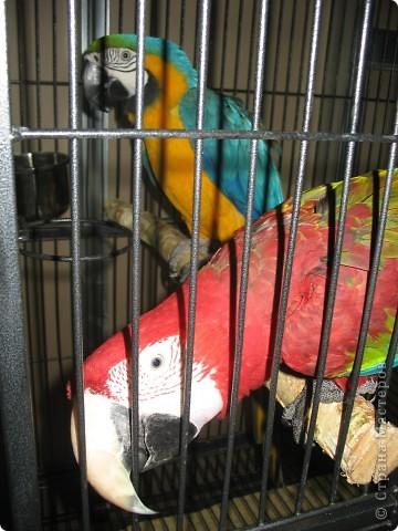 Сегодня мы приглашаем всех посетить выставку попугаев и экзотических птиц. Думаю, что писать здесь что-то об этих замечательных созданиях нет смысла. Просто смотрите и любуйтесь их окраской) фото 7