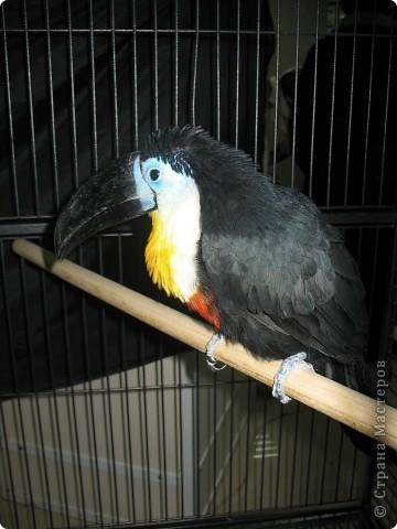 Сегодня мы приглашаем всех посетить выставку попугаев и экзотических птиц. Думаю, что писать здесь что-то об этих замечательных созданиях нет смысла. Просто смотрите и любуйтесь их окраской) фото 8