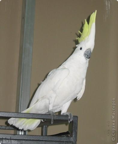 Сегодня мы приглашаем всех посетить выставку попугаев и экзотических птиц. Думаю, что писать здесь что-то об этих замечательных созданиях нет смысла. Просто смотрите и любуйтесь их окраской) фото 13