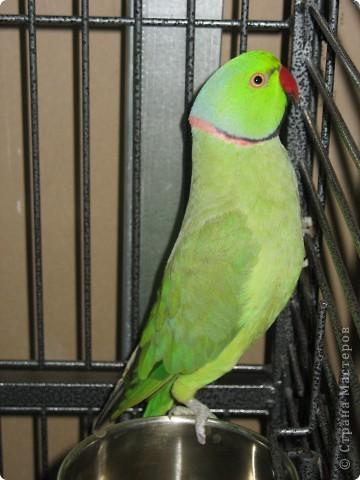 Сегодня мы приглашаем всех посетить выставку попугаев и экзотических птиц. Думаю, что писать здесь что-то об этих замечательных созданиях нет смысла. Просто смотрите и любуйтесь их окраской) фото 10
