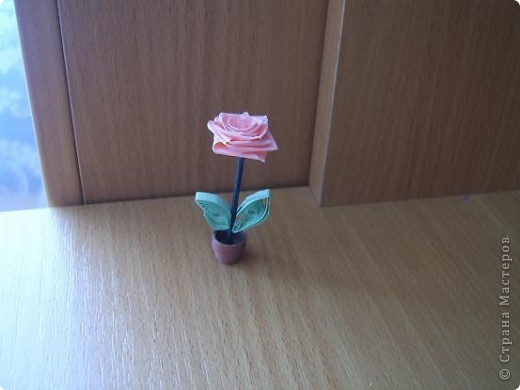 Роза нежная моя фото 1