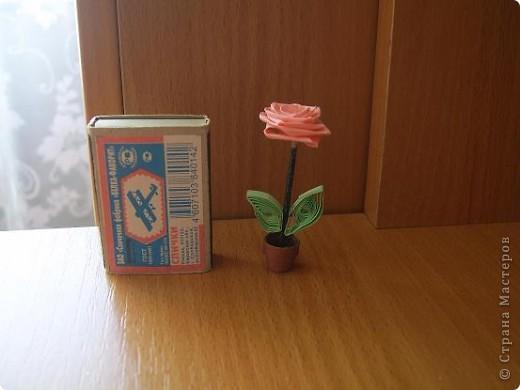 Роза нежная моя фото 2