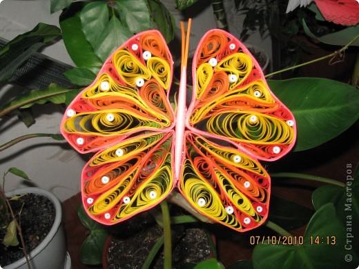 Вот моя перваяя бабочка! фото 1
