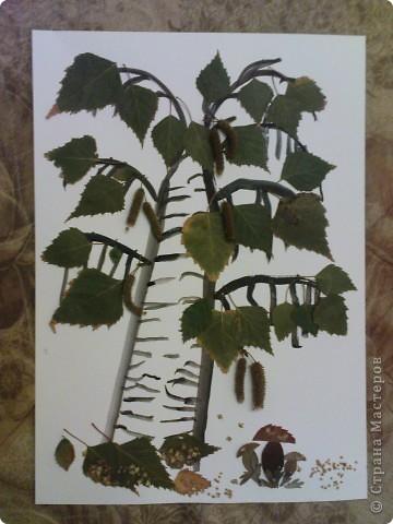 """поделка в садик. делала с Максимом (4 года). сначала Максим нарисовал ствол и веточки, потом приклеивали листики и почки, грибочки """"посыпали"""" раскошившимися  почками фото 1"""
