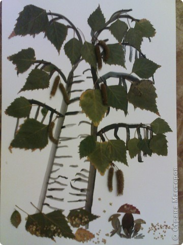"""поделка в садик. делала с Максимом (4 года). сначала Максим нарисовал ствол и веточки, потом приклеивали листики и почки, грибочки """"посыпали"""" раскошившимися  почками фото 3"""