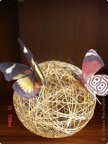 Бабочки прилетели фото 2