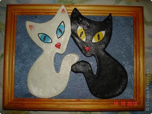 Соленые кошки фото 4