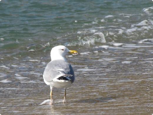 Находка. Море (17.10.10) фото 3