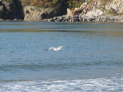 Находка. Море (17.10.10) фото 8