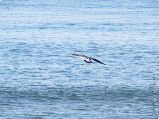 Находка. Море (17.10.10) фото 9