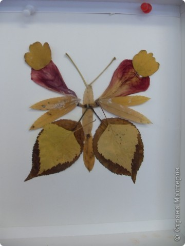 Бабочка. Панчукова Татьяна. фото 6