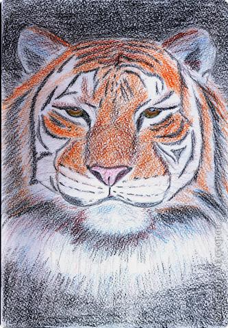 Тигр... сытый)))