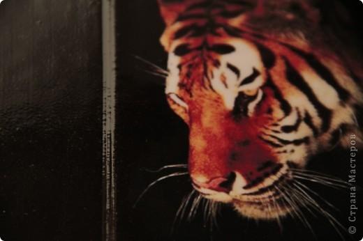 """Второй вариант обложки на тему """"Морские глубины"""", с использованием распечатки работы Дэвида Миллера. фото 5"""