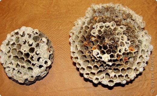 Я с первого занятия этого года пообещала мальчишек накормить медом из одуванчиков. Конечно, это очень заинтриговало мальчишек, тем более, что мама не смогла на этот вопрос им ответить.  И сегодня настал такой момент. Пчелы живут у ульях – это им известно. А где живут осы?  фото 9
