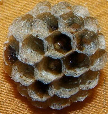 Я с первого занятия этого года пообещала мальчишек накормить медом из одуванчиков. Конечно, это очень заинтриговало мальчишек, тем более, что мама не смогла на этот вопрос им ответить.  И сегодня настал такой момент. Пчелы живут у ульях – это им известно. А где живут осы?  фото 19