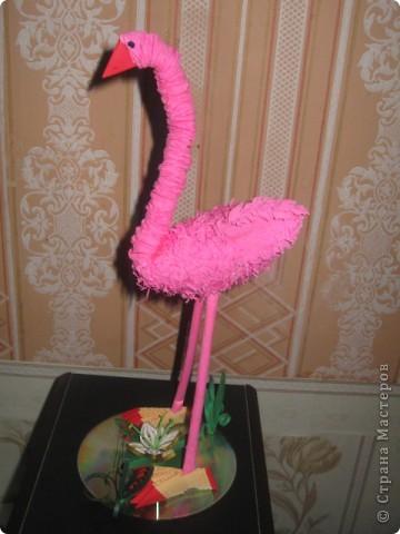 Наш розовый фламинго, фото 2