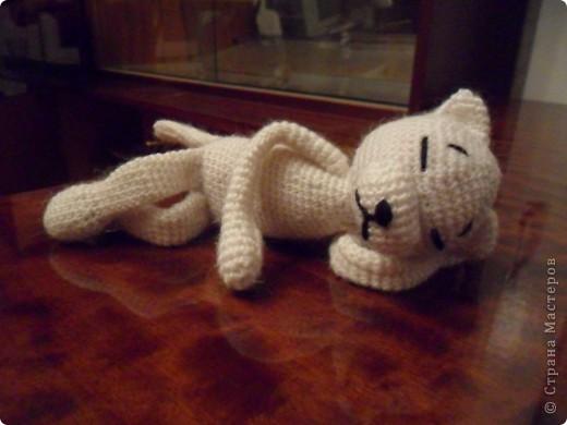 Лапки и хвост кота фото 4