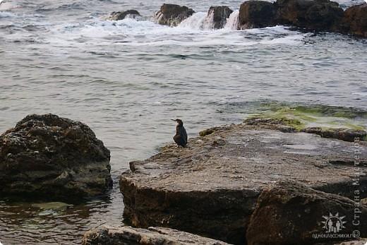 Мыс Тарханкут, полуостров Тарханкут находятся на западе Крыма.  Уникальная природная экосистема и самая экологически чистая акватория Черного моря находятся именно здесь.                                                                    Когда-то полуостров носил название Эски Форос, означающее Старый маяк, и правда на морских картах ХIV века, есть обозначения этого места.  Судя по названию мыса Атлеш (огонь), маяк существовал здесь с древнейших времен. Позднее появилось укрепленное сооружение, дававшее сигналы проходящим судам. Маяк существует и в наше время (башня высотой 42 м была построена из белого инкерманского известняка в 1816 г), нынче это современное строение оборудованное по последнему слову техники. фото 22