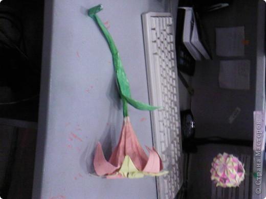 Лилия отдельно в разнх ракурсах. фото 1