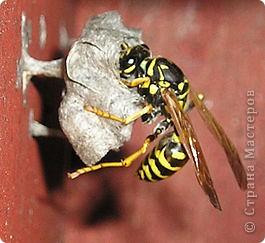 Я с первого занятия этого года пообещала мальчишек накормить медом из одуванчиков. Конечно, это очень заинтриговало мальчишек, тем более, что мама не смогла на этот вопрос им ответить.  И сегодня настал такой момент. Пчелы живут у ульях – это им известно. А где живут осы?  фото 6