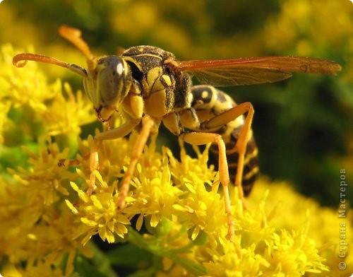 Я с первого занятия этого года пообещала мальчишек накормить медом из одуванчиков. Конечно, это очень заинтриговало мальчишек, тем более, что мама не смогла на этот вопрос им ответить.  И сегодня настал такой момент. Пчелы живут у ульях – это им известно. А где живут осы?  фото 22