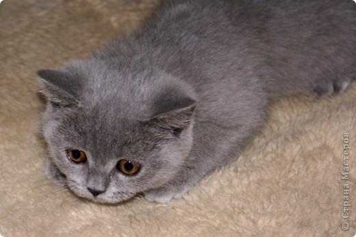 Хочу показать Вам забавную маленькую кошку одного моего знакомого, её зовут Лайтли... фото 2