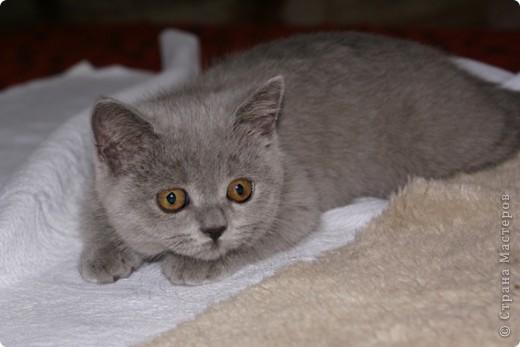 Хочу показать Вам забавную маленькую кошку одного моего знакомого, её зовут Лайтли... фото 3
