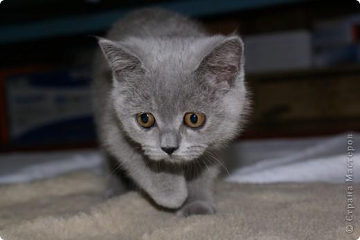Хочу показать Вам забавную маленькую кошку одного моего знакомого, её зовут Лайтли... фото 1