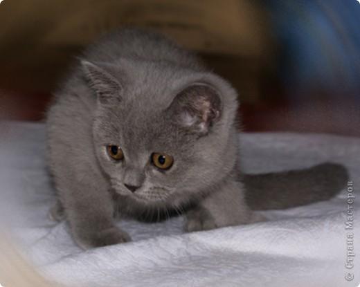 Хочу показать Вам забавную маленькую кошку одного моего знакомого, её зовут Лайтли... фото 6