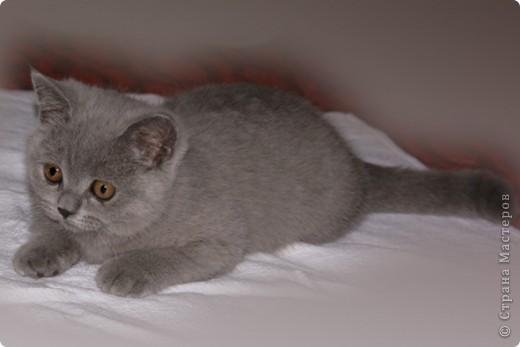 Хочу показать Вам забавную маленькую кошку одного моего знакомого, её зовут Лайтли... фото 9