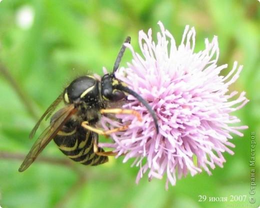 Я с первого занятия этого года пообещала мальчишек накормить медом из одуванчиков. Конечно, это очень заинтриговало мальчишек, тем более, что мама не смогла на этот вопрос им ответить.  И сегодня настал такой момент. Пчелы живут у ульях – это им известно. А где живут осы?  фото 21