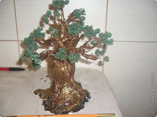 моё деревце бонсай