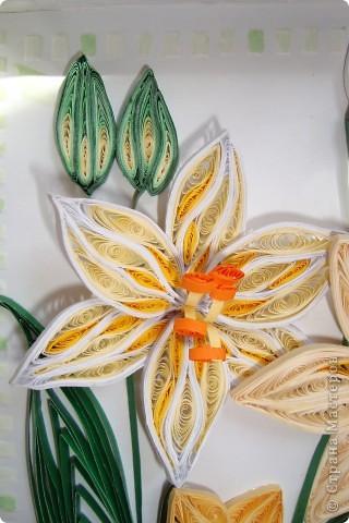 Вот такие мои лилии ))) фото 2