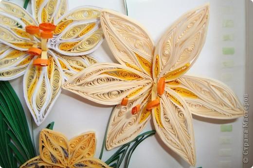Вот такие мои лилии ))) фото 3
