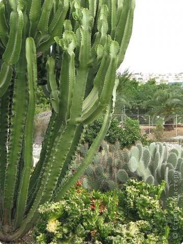 Спешу поделиться красотой, сегодня посетили парк Утопия, который находится в центре Израиля. В Парке есть кактусы, орхидеи, хищные растения и много другого интересного. Сегодня помещаю только кактусы. фото 14