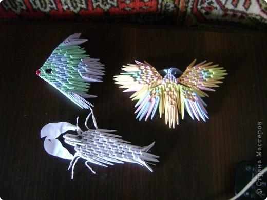 Рыбка, бабочка, рак