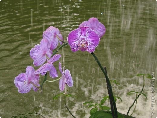 Выставляю продолжение экскурсии. Орхидеи уже были у Нюсеньки (http://stranamasterov.ru/node/87695?c=favorite)и я сомневалась, выставлять или нет, оставила только непохожие, если пропустила,  отметьте-удалю. фото 2