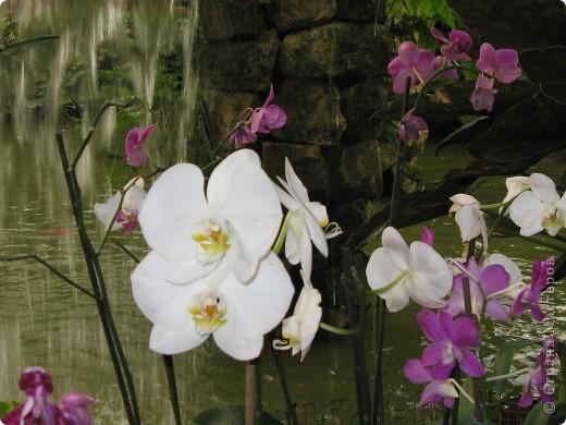 Выставляю продолжение экскурсии. Орхидеи уже были у Нюсеньки (http://stranamasterov.ru/node/87695?c=favorite)и я сомневалась, выставлять или нет, оставила только непохожие, если пропустила,  отметьте-удалю. фото 3
