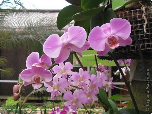 Выставляю продолжение экскурсии. Орхидеи уже были у Нюсеньки (http://stranamasterov.ru/node/87695?c=favorite)и я сомневалась, выставлять или нет, оставила только непохожие, если пропустила,  отметьте-удалю. фото 4