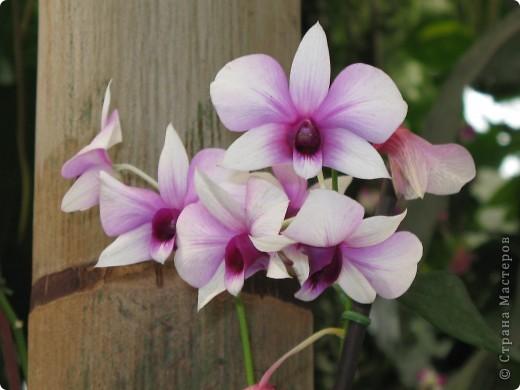 Выставляю продолжение экскурсии. Орхидеи уже были у Нюсеньки (http://stranamasterov.ru/node/87695?c=favorite)и я сомневалась, выставлять или нет, оставила только непохожие, если пропустила,  отметьте-удалю. фото 1