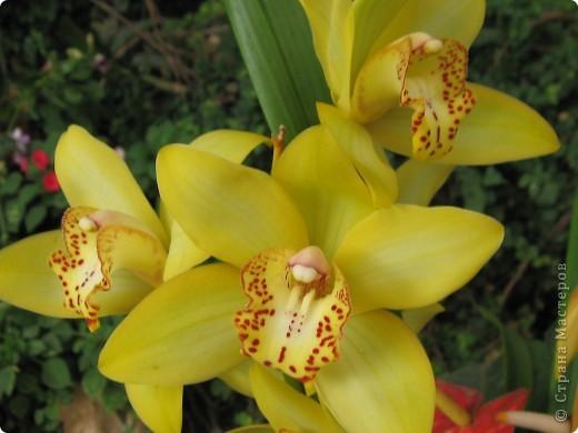 Выставляю продолжение экскурсии. Орхидеи уже были у Нюсеньки (http://stranamasterov.ru/node/87695?c=favorite)и я сомневалась, выставлять или нет, оставила только непохожие, если пропустила,  отметьте-удалю. фото 12