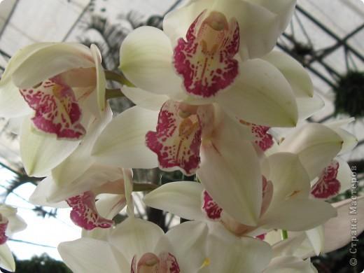 Выставляю продолжение экскурсии. Орхидеи уже были у Нюсеньки (http://stranamasterov.ru/node/87695?c=favorite)и я сомневалась, выставлять или нет, оставила только непохожие, если пропустила,  отметьте-удалю. фото 13