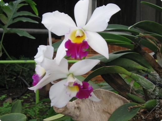 Выставляю продолжение экскурсии. Орхидеи уже были у Нюсеньки (http://stranamasterov.ru/node/87695?c=favorite)и я сомневалась, выставлять или нет, оставила только непохожие, если пропустила,  отметьте-удалю. фото 14