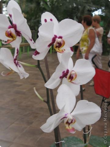 Выставляю продолжение экскурсии. Орхидеи уже были у Нюсеньки (http://stranamasterov.ru/node/87695?c=favorite)и я сомневалась, выставлять или нет, оставила только непохожие, если пропустила,  отметьте-удалю. фото 16