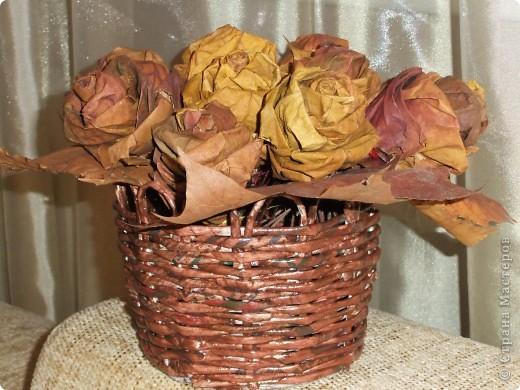 Это розы фото 2
